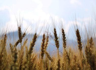 Česká podnikatelská mise společně s ministrem zemědělství zamířila do Turecka