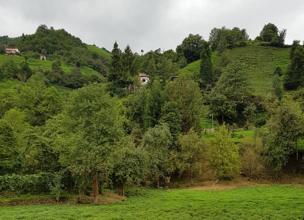 Turecko Černé moře čajová plantáž