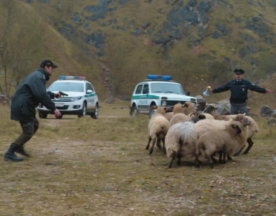 Sebevražda ovce Turecko